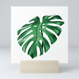 Split leaf philodendron leaf isolated on white Mini Art Print