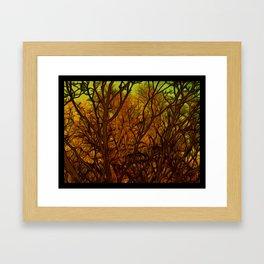 Lux Splendor Framed Art Print