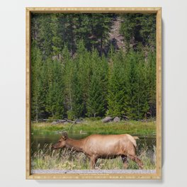 Elk Walking on the Firehole River in Yellowstone National Park Serving Tray