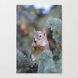 Mr. Squirrel ~ I Canvas Print