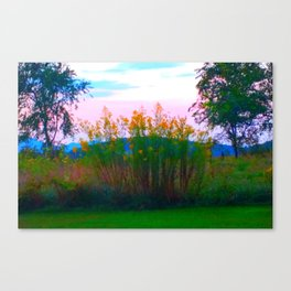 Field of Golden Rods Canvas Print