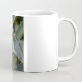 Aloe Vera Leaves  Coffee Mug