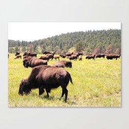 Wide Open Pastures Canvas Print