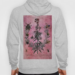 Vintage Bees with Toadflax Botanical illustration collage Hoody