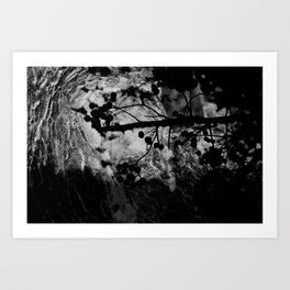 Out On A Limb I Art Print