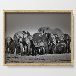 Elephant Herd Circling Serving Tray
