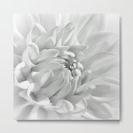 Dahlia white 191 Metal Print