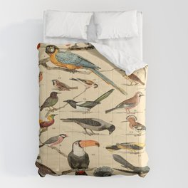 Birds Vintage Scientific Illustration Educational Diagrams Popular History of Animals Comforters