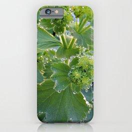 Ladies Mantle iPhone Case