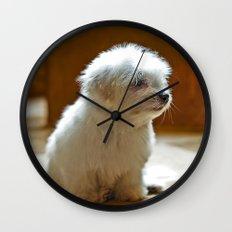 Coton de Tulear Puppy Wall Clock