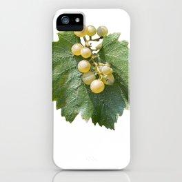 grape grows on vineyard in summer iPhone Case