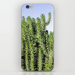 Cactus Photography - Green Cactus Decor - Cacti Art iPhone Skin