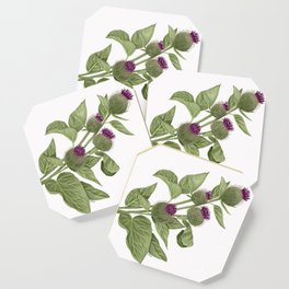 Flowers in the wild Coaster