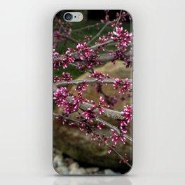 Eastern Redbud Branch iPhone Skin