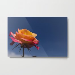 Pink and Orange Rose Metal Print