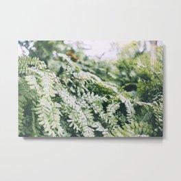 Fern Garden, II Metal Print