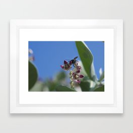 Busy Beetle Framed Art Print