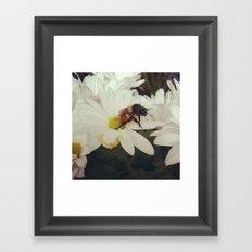 Buzzbuzz Framed Art Print