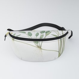 Floating water-plantain  from Les liliacees (1805) by Pierre Joseph Redoute (1759-1840) Fanny Pack