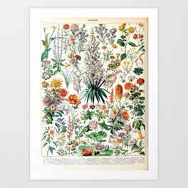 Adolphe Millot - Fleurs B - French vintage poster Art Print