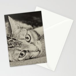 little cat Stationery Cards
