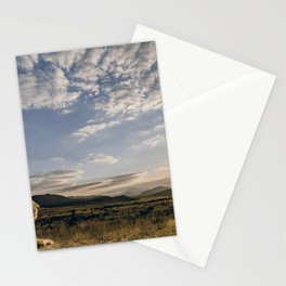 Majestic Beautiful Male African Lion Chilling In Desert At Romantic Sunset Ultra HD Stationery Cards