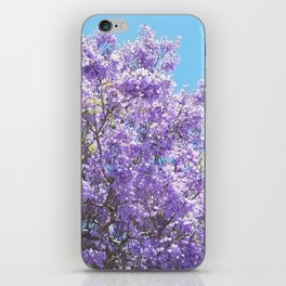 Jacaranda in bloom iPhone Skin
