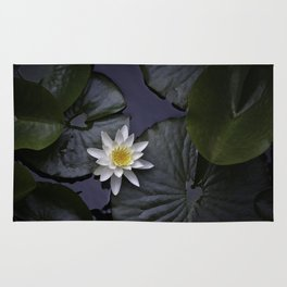 white water lily Rug