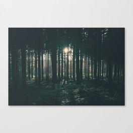 Sun through the Woods Canvas Print