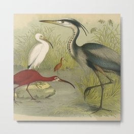 Water Birds Metal Print