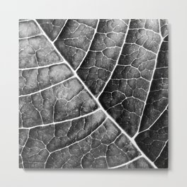LEAF STRUCTURE no2b BLACK AND WHITE Metal Print