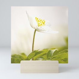 Wood Anemone Blooming in Forest Mini Art Print