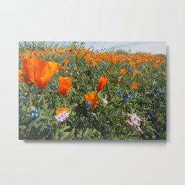 California Wildflower Superbloom Metal Print