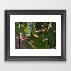 Summer Cactus in Flower Framed Art Print