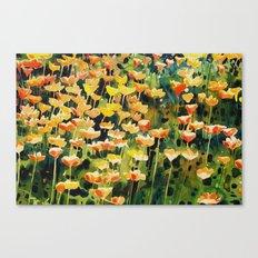 California Popies Canvas Print