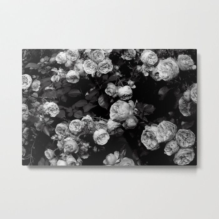 Roses are black and white Metal Print
