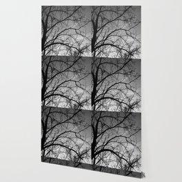 November Tree Wallpaper