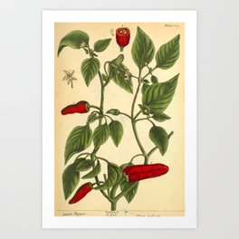 "Hot Pepper by Elizabeth Blackwell from ""A Curious Herbal,"" 1737 (benefiting The Nature Conservancy) Art Print"