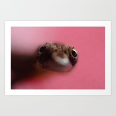 Lizard Stare Art Print
