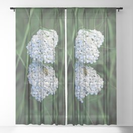 Yarrow Friend Sheer Curtain
