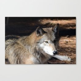 The Eyes of a Wolf Canvas Print