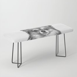 Black and White Chihuahua Bench