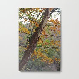 Cuyahoga Camouflage Metal Print