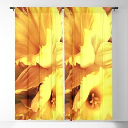 Daffodils In Spring Blackout Curtain