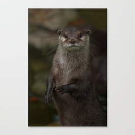 Curious Otter Canvas Print