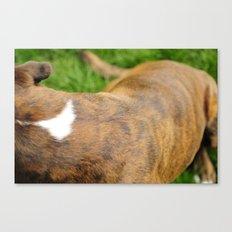 A Boxer's Body Canvas Print