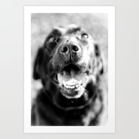 labrador Art Prints featuring Labrador by Steph Lauren