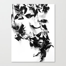 Bay leaves 4 Canvas Print