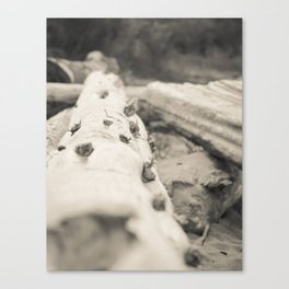 West Beach Canvas Print