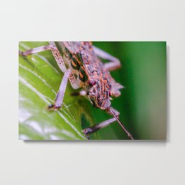 Marmorated Stink Bug II. Macro Photograph. Metal Print